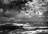 A Japanese bomb splashes astern of a U.S. carrier as the enemy plane pulls out of its dive above the carrier.  In the center is another enemy plane that has made an unsuccessful dive.  Battle of Santa Cruz.  October 26, 2942.  (Navy)<br /> NARA FILE #:  080-G-20989<br /> WAR & CONFLICT BOOK #:  977