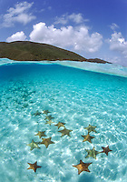 Split Level Starfish<br />