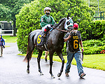 JUNE 03, 2020 :Tourista  in the paddock for $64,000 Maiden Special Weight, fortwo year ols going 5 furlongs, at Belmont Park, Elmont, NY.  Sue Kawczynski/Eclipse Sportswire/CSM
