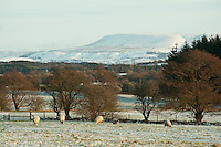 Looking from Chipping towards Pendle Hill in winter, Clitheroe, Lancashire.