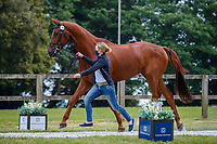 AUS-Sammi Birch presents Finduss PFB during the First Horse Inspection for the CCI-L 4*. 2021 GBR-Bicton International Horse Trials. Devon. Great Britain. Copyright Photo: Libby Law Photography