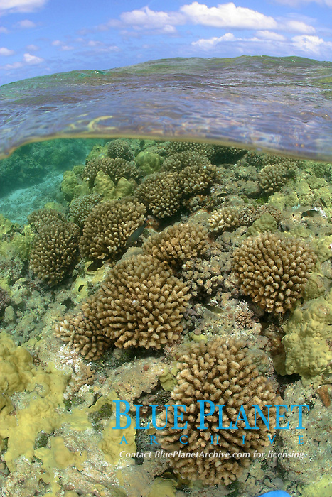 coral reef, split image, Maro reef, Papahanaumokuakea Marine National Monument, Northwestern Hawaiian Islands, Hawaii, USA, Pacific Ocean