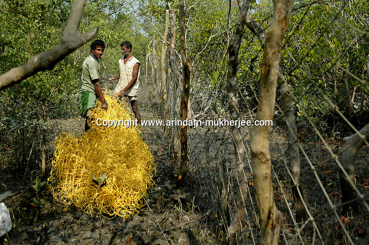 Villagers working as contract labourer for the foirest department. These men are putting nets along the border of  the forest so that tigers cannot enter the villages. These labourers get 2 usd as wage. Sunderban, West Bangal, India. Dec 2005. Arindam Mukherjee