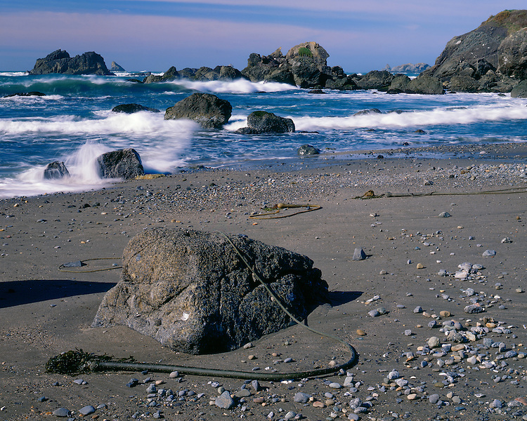 Kelp on rocks at low tide; Harris Beach State Park, OR