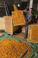 France, île de la Réunion, Saint-Joseph, La Plaine des Grègues, culture du curcuma - séchage des rhizomes - La Maison du Curcuma //  France, Reunion island (French overseas department), Saint Joseph, La Plaine des Gregues, cultivation of turmeric, drying the rhizomes -  La Maison du Curcuma (Tumeric House)<br /> <br /> Auto N°: 2014 - 115