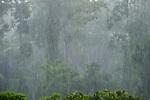 Torrential afternoon rain storm in lowland rainforest. Danum Valley, Sabah, Borneo