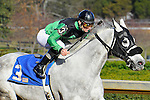Jan.21, 2013 - Hot Springs, Arkansas, U.S - Jockey Alex Birzer road Knight In Armour, trained by Jamie Ness, to victory in the 4th race Saturday afternoon at Oaklawn Park.  (Credit Image: © Jimmy Jones/Eclipse/ZUMAPRESS.com)