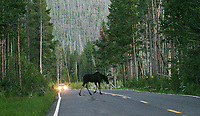 Another of my early image licenses was for this photo, I believe in conjunction with a study on vehicular collisions with wildlife.