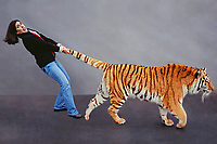 Tiger by the tail.<br /> <br /> Model Released: Lisa Davis