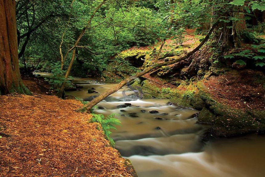 Capelrig Burn, Rouken Glen Park, East Renfrewshire