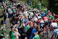 up the brutal (last climb) Alto de Arraiz (up to 25% gradients!), 7km from the finish <br /> <br /> Stage 12: Circuito de Navarra to Bilbao (171km)<br /> La Vuelta 2019<br /> <br /> ©kramon
