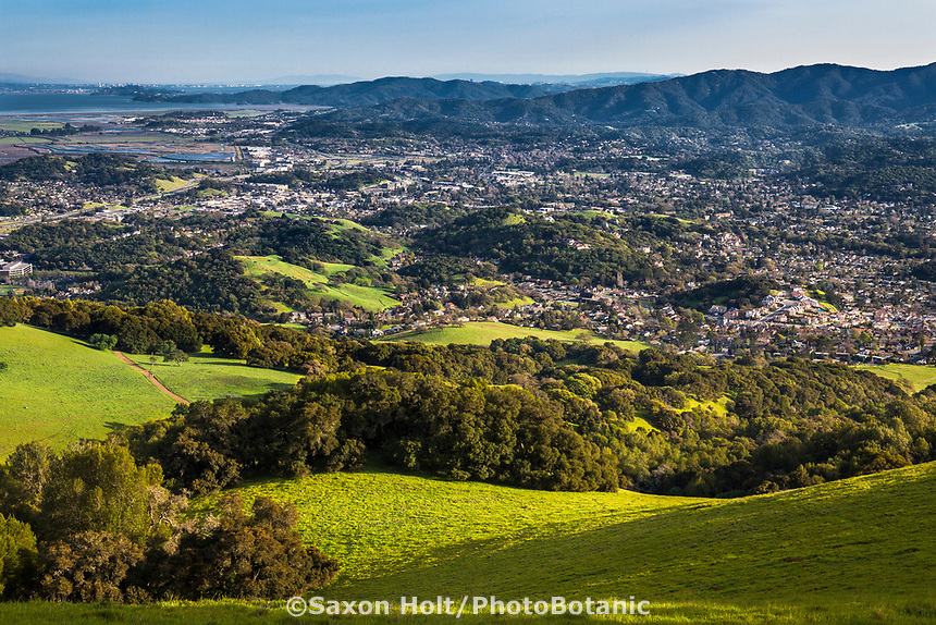 City of Novato, California seen from open space of Mount Burdell California spring green hills with Oak trees and San Pable Bay in distance