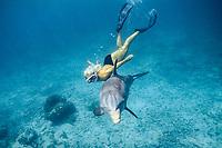 JoJo, a wild sociable bottlenose dolphin, Tursiops truncatus, or ambassador dolphin, swims with a friend off Providenciales (Provo), Caribbean Sea, Turks and Caicos Islands (W. Atlantic Ocean)