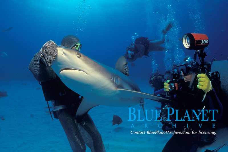 scuba divers and Caribbean reef shark, Carcharhinus perezii, Bahamas, Caribbean, Atlantic
