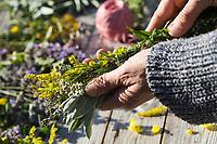 Räucherbüschel binden, Räuchergut, Räuchern, Räucherbündel, smudge-sticks, Räucherritual, Räucherung, Räuchern mit Kräutern, Kräuter verräuchern, Wildkräuter, Duftkräuter, Duft, fire, Smoking with herbs, wild herbs, aromatic herbs, fumigate, cure. Königskerze, Verbascum spec., Mullein, Schafgarbe, Gewöhnliche Schafgarbe, Wiesen-Schafgarbe, Schafgabe, Achillea millefolium, yarrow, Common Yarrow, Achillée millefeuille, la Millefeuille. Tüpfel-Johanniskraut, Echtes Johanniskraut, Durchlöchertes Johanniskraut, Tüpfeljohanniskraut, Tüpfel-Hartheu, Hartheu, Hypericum perforatum, St. John´s Wort, Tipton's weed, rosin rose, goatweed, chase-devil, Klamath weed, Le millepertuis perforé, millepertuis commun, millepertuis officinal, Kanadische Goldrute, Solidago canadensis, Canada Goldenrod, Rainfarn, Rain-Farn, Tanacetum vulgare, Chrysanthemum vulgare, Tansy, Salbei, Salvia spec., Sage, Beifuß, Gewöhnlicher Beifuß, Beifuss, Artemisia vulgaris, Mugwort, common wormwood, wild wormwood, wormwood. L'Armoise commune, L'Armoise citronnelle, Wilder Dost, Echter Dost, Gemeiner Dost, Dost, Origanum vulgare, Oregano, Oreganum, Wild Marjoram, L'origan ou origan commun, marjolaine sauvage, marjolaine vivace