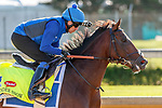 LOUISVILLE, KENTUCKY - MAY 02: Thunder Snow, owned by Godolphin and trained by Saeed bin Suroor, exercises in preparation for the Kentucky Derby at Churchill Downs on May 2, 2017 in Louisville, Kentucky. (Photo by Jesse Caris/Eclipse Sportswire/Getty Images)