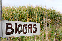 DEUTSCHLAND Schleswig Holstein,  Wegweiser fuer Biogas Anlage im  Maisfeld / GERMANY sign board for Biogas plant in maize field