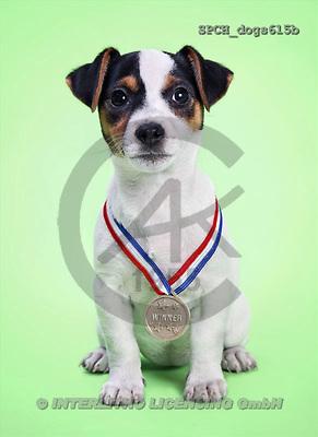 Xavier, ANIMALS, dogs, photos(SPCHdogs615b,#A#) Hunde, perros