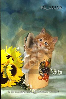Interlitho, Alberto, ANIMALS, cats, photos, cat, bag, sunflowers(KL15139,#A#) Katzen, gatos