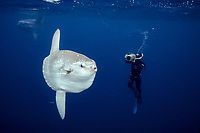 Ocean sunfish and freediving videographer open ocean, Baja California, Mola mola, Mexico, East Pacific Ocean