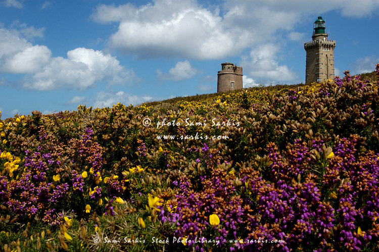 Old and new lighthouses behind the flowery moor, Cap Fréhel, Brittany, France.
