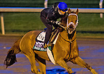 October 27, 2015 :   Red Rifle, trained by Todd A. Pletcher and owned by Twin Creeks Racing Stable LLC, exercises in preparation for the Longines Breeders' Cup Turf at Keeneland Race Track in Lexington, Kentucky on October 27, 2015. Scott Serio/ESW/CSM