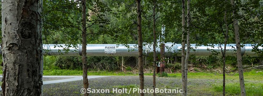 Alaska Pipeline near Fairbanks