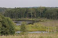 Weiher, Teich, Tümpel, Naturschutzgebiet NSG Pantener Moorweiher, Schleswig-Holstein