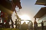 TOYOAKE,JAPAN-DECEMBER 03: Yamakatsu Ace,ridden by Kenichi Ikezoe,after winning the Kinko Sho at Chukyo Racecourse on December 03,2016 in Toyoake,Aichi,Japan (Photo by Kaz Ishida/Eclipse Sportswire/Getty Images)