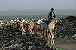 Chameliers vers le village de Yaiza. Ile de Lanzarote. .Camels nearby Yaiza village.  Lanzarote island