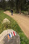 Israel, Jerusalem Mountains, Israel Trail in Nahal Ksalon