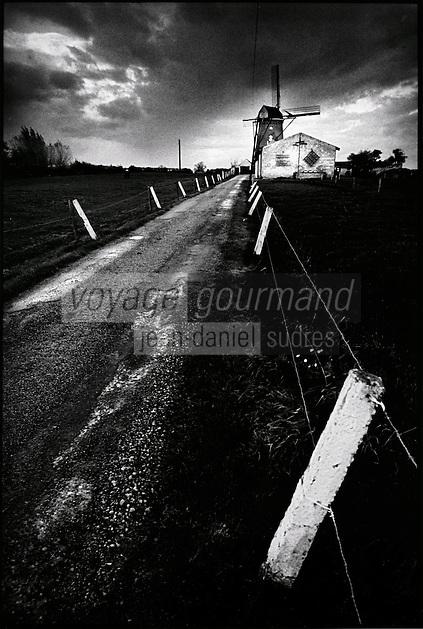 Europe/France/Nord-Pas-de-Calais/59/Nord/Steenvoorde:  Moulin de Noordmeulen