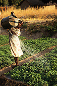 Ujiji, Tanzania. Girl using a watering can to water crops.