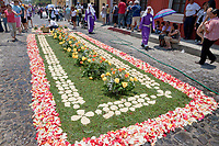 Antigua, Guatemala.  An alfombra (carpet) of flowers, pine needles, and other traditional materials decorates the street in advance of the passage of a procession during Holy Week, La Semana Santa.  It will be destroyed within a few hours of its creation.