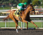 February 13, 2010.Caracortado riden by Paul Atkinson, wins The Robert B. Lewis Stakes at Santa Anita Park, Arcadia, CA