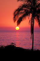 Sunset and silhouetted palm tree, Maui, Hawaii, USA.
