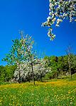 Deutschland, Bayern, Oberbayern, Chiemgau:  Blumenwiese und Apfelbluete   Germany, Bavaria, Upper Bavaria, Chiemgau: flower meadow and fruit tree blossom