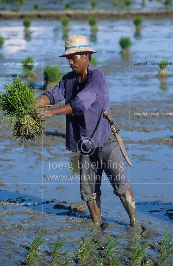 PHILIPPINES Palawan, farmer replant rice in field  / Philippinen Palawan, Landarbeiter pflanzen Reissetzlinge um