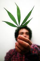 Uso di Marijuana. Use of Marijuana...