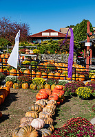 Atkins Farmers Market Harvest display.