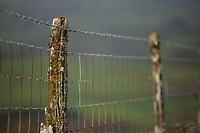 Fence posts in Llangammarch Wells, Powys, Wales, UK