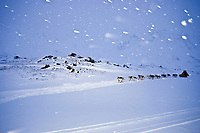 Mitch Seavey at the summitt of Rainy Pass with wind blowing 20 mph and snowing during the 2010 Iditarod, Southcentral Alaska