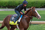 LOUISVILLE, KY - MAY 3:  Free Drop Billy, trained by Dale Romans, exercises in preparation for the Kentucky Derby at Churchill Downs on May 3, 2018 in Louisville, Kentucky. (Photo by Eric Patterson/Eclipse Sportswire/Getty Images)