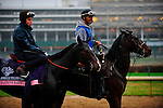 Elusive Kate, trained by Jean-Claude Rouget and to be ridden by Christophe Lemaire exercises in preparation for the 2011 Breeders' Cup at Churchill Downs on November 3, 2011.