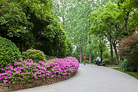 Yangzhou, Jiangsu, China.  Pedestrian Walkway in the Slender West Lake Park.