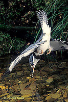 Kingfishers - Life Cycle