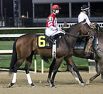 April 26, 2014 Derby Trial winner Embellishing Bob and jockey Brian Hernandez Jr. in the post parade at Churchill Downs. He is owned by Martin Cherry and trained by Steve Margolis.