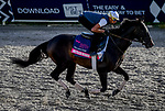 January 24, 2020: Instilled Regard gallops as horses prepare for the Pegasus World Cup Invitational at Gulfstream Park Race Track in Hallandale Beach, Florida. John Voorhees/Eclipse Sportswire/CSM