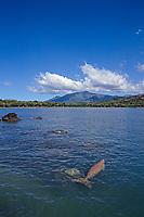 Dugong, Dugong dugon, Tanna island, Vanuatu, South Pacific Ocean