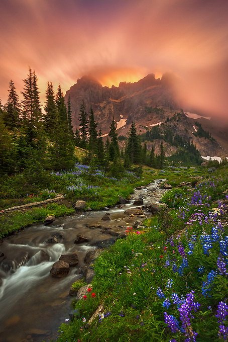 A mountain stream runs amidst wildflowers during a fiery display at sunrise in Oregon's Mt. Jefferson Wilderness.